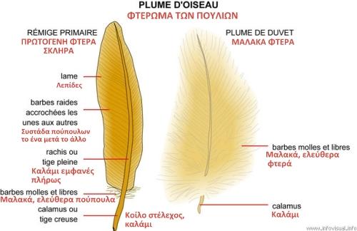 structure_plume_oiseau[1]