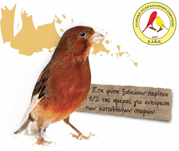 Τα πτηνά - The birds - ΕΛΚΕ