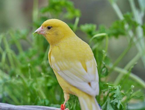 bird-3386319_1920