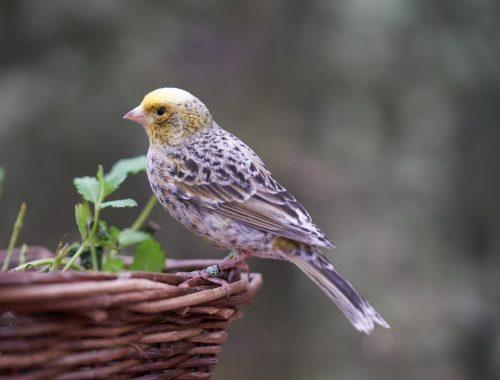 bird-3386326_1920